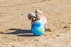 Won't anybody come and tackle me? (Peter.Stokes) Tags: beach coast coastline colour colourphotography countryside dogs england family kent landscape nature photo photography sea spring