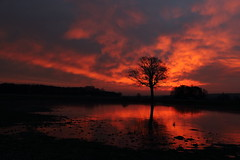 The Tree (geraldtourniaire) Tags: schärfentiefe canon natur nature 6d eos6d landschaft licht l franken mittelfranken sonnenaufgang baum greatphotographers