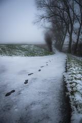 Who goes there? (Ingeborg Ruyken) Tags: shertogenbosch autumn mist fall flickr snow ochtend 500pxs empel instagram empelsedijk sneeuw natuurfotografie morning koornwaard herfst fog