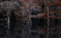 Mirror Mirror (carolina_sky) Tags: bayou nightmares dark mirror black swamp reflection baldcypress skymatthewsphotography pentaxk1 pentax70200mm spanishmoss louisiana ybs2018