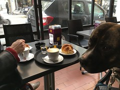 3 gennaio 2019 (indigo_jones) Tags: cafe tafel tavelo cane hond dog coffee koffie pastry paste crema breakfast outding family bologna italy italia caféculture staffy amstaff brindle husband