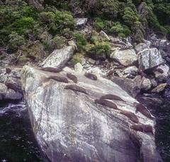 Naptime (BunnySafari) Tags: yashicamat124g milfordsound newzealand january14 southisland stunninglandscape 2018 fuji400 film boattour