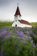 Windy at Vik Church (Longleaf.Photography) Tags: church lupine flowers purple vik iceland gusty wind windy