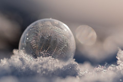 ''Boule de crystal!'' (pascaleforest) Tags: macro boule givre cold light lumière bohek froid winter hiver nature nikon passion snow neige québec canada