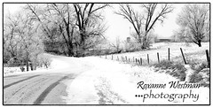 Frosty drive by Leonard (roxiesplacephotography) Tags: north dakota winter snow frost hoarfrost farm ranch fenceline fencepost road