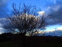 Fermo (simona300) Tags: black cielo landscape light lights blusky sky fermo filmphotografy marche albero tree
