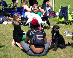 Poodles (Mike McCall) Tags: copyright2019mikemccall photography photo image usa culture southern america thesouth unitedstates northamerica south georgia stpatricksdayrugbytournament stpatrick day rugby tournament game sport sports field pitch football savannah chatham county documentary editorial side daffin park daffinpark parkside