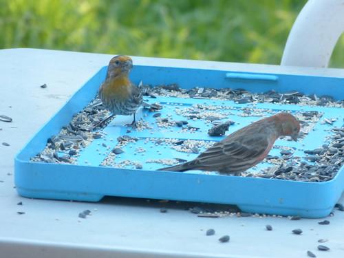 birds feeding 3 14 19