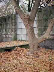 Der Baum. / 12.11.2018 (ben.kaden) Tags: berlin lichtenberg friedrichsfelde amtierpark friedrichkracht formsteinwand kunstambau architekturderddr ostmoderne 2018 12112018