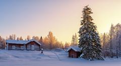 winter scenery (juhwie.foto - PROJECT: LEIDENSCHAFT-LICH-T) Tags: finnland finland scandinavia tree snow winter sunset house landscape pentax ricohimaging ngc pentaxart pano panoramic
