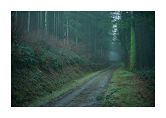 Lost Gwydhyel  5 (Barry Haines) Tags: cardinham woods cornwall woodland sony a7r2 a7rii 50mm speedmaster mitakon f095 mist fog early evening lost track trees