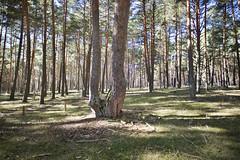 MEDfor - Winter School 15 January 2019 (iuFOR) Tags: medfor mediterranean forest forestry soyforestal palencia palenciaconp iufor sostenible research institute university valladolid universidad master erasmus plus