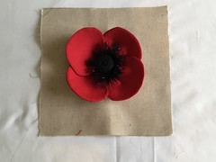 Photo of Poppies for Remembrance.