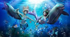 The Dolphin race (meriluu17) Tags: marine aqua mermaid mermaids underwater undersea ocean sea paciffic blue fish fishes dolphin dolphins angelfish hextrordinary jian fantasy surreal siren sirens playful chase race fun happines sisters sister mersoul people