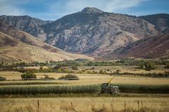 Farming The Valley (Brad Prudhon) Tags: 2018 farm harvester mantua september utah crop field harvest