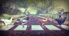 *Why did the chicken cross the road? To get to the other side of course!* ❤ (Ⓐⓝⓖⓔⓛ (Angeleyes Roxley)) Tags: missing melody chicken cross road sl secondlife mesh sim