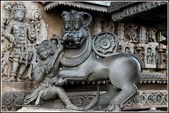 8471 - Emblem of Hoysala Kingdom at Belur temple (chandrasekaran a 55 lakhs views Thanks to all.) Tags: hoysala empire belur chennakeshavatemple emblem sala tiger jain guru sculpture canoneos6dmarkii tamronef28300mm