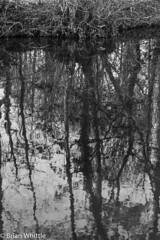 IMGP9339 (Brian H Whittle) Tags: blackwhite leedsliverpoolcanal rufford canal