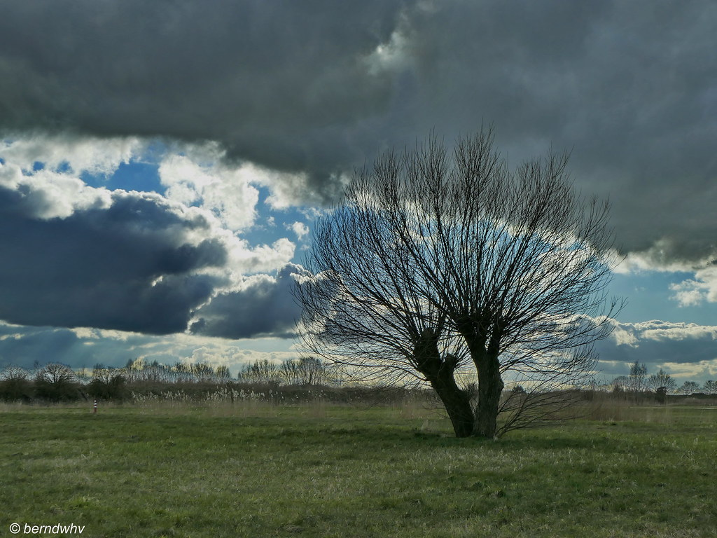 95d2f3d81ab06 Landschaft bei Kleinensiel   Landkreis Wesermarsch (berndwhv) Tags   deutschland norddeutschland niedersachsen bäume trees