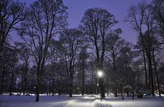 Purple winter (DameBoudicca) Tags: sweden sverige schweden suecia suède svezia スウェーデン uppsala carolinaparken engelskaparken night natt nacht notte nuit noche 夜 snow snö schnee nieve neige neve 雪 winter vinter invierno hiver inverno 冬 park parque parc parco 公園 こうえん