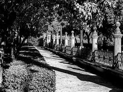 Nice place (Ennio Fratini) Tags: andalucia bw españa europa omdem1 olympus sevilla architecturalelement blackandwhite garden mirrorless travel viajes