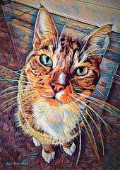 "(c)  "" Sir Dexter Charming "" (Jui Jah Fari) Tags: katze cat juijahfari bunt multicolor color colour art artistic cats face sweet kunst kater tier"