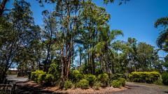 KB2_6623-2 (Kev Byrnes Photography) Tags: brisbane queensland australia au