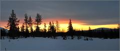 sunrise dans le grand blanc... (Save planet Earth !) Tags: sunrise laponie ciel soleil nikon amcc finland leverdesoleil winter hiver snow niege tree arbre