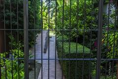 La Reja y el Jardín (<María>) Tags: reja hierro jardín setos hojas flores luz españa andalucía