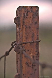 Fence Post With Measles