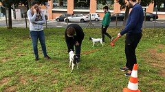 IMG_8633 (Doggy Puppins) Tags: educación canina adiestramiento canino perro dog
