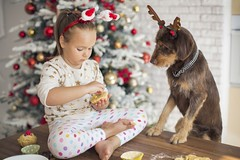5 Holiday Foods That Are Dangerous to Pets (katalaynet) Tags: follow happy me fun photooftheday beautiful love friends