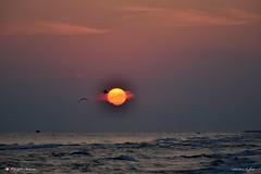 COME UN DIPINTO (Salvatore Lo Faro) Tags: sole mare acqua oceano nuvole rosso giallo spiaggia alba gabbiani onde gargano rodi puglia italia italy salvatore lofaro nikon 7200