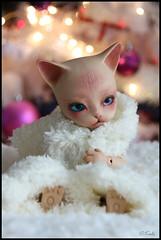 Love Cocooning ^^ (Kalisan12) Tags: pipos baha piposdoll christmas bjdcat dollcat