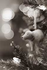 How Much is that Doggy in the Window? (Katrina Wright) Tags: dsc2938 christmas christmasdecoration dog bokeh christmastree xmas monochrome thursday hmbt macro dof