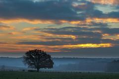 Premières lueurs - first glow (gopillentes) Tags: arbre aube automne brume champs ciel cultures lumière nuages soleil vaches