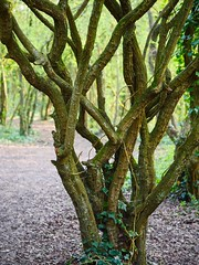 Creative Trees (Leigha Louisee) Tags: nature tree trees awesome structure branches green branch