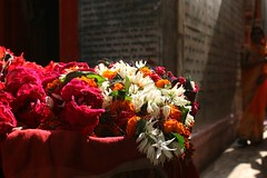 flowers for the gods, scriptures for men (daniel virella) Tags: varanasi वाराणसी india bharat temple hindu flowers offer woman sari scriptures street uttarpradesh picmonkey hinduism