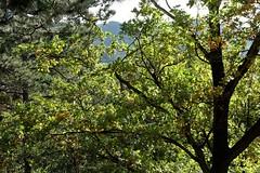 Sudmersberger Warte (angeschaut) Tags: 2018 harz natur historisch bäume sträucher