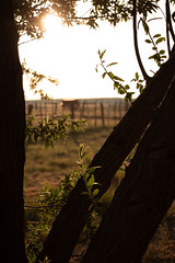 2018_05_22_WryeRanch_Night-51.jpg (alyssasoles) Tags: outdoors nightphotography newmexico wryeranch caboose longexposures acom2303 chickencoop