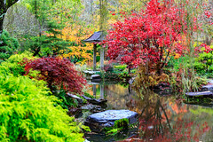 Japanese Garden @ Gibbs Gardens (Gregory Faggion) Tags: garden japanesegarden fall colors water landscape gibbsgarden northgeorgia