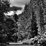 Trees All Around While on the Stehekin River Road (Black & White, North Cascades National Park Service Complex) thumbnail
