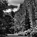 Trees All Around While on the Stehekin River Road (Black & White, North Cascades National Park Service Complex)