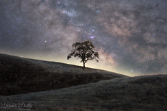 Standing tree (wandering indian) Tags: landscape longexposure kedardatta nature milkyway astrophotography trees california
