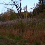 Small wetland thumbnail