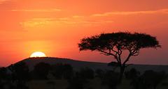 Sunset - Masaï Mara - Kenya (lotusblancphotography) Tags: africa afrique masaïmara kenya nature landscape paysage sunset crépuscule sky ciel tree arbre clouds nuage sun soleil