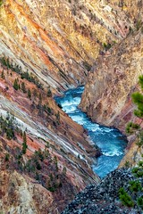 Grand Canyon of Yellowstone (Charles Patrick Ewing) Tags: mountain mountains canyon canyons river wivefrs water landscape landscapes outdoor nature natural colors colorful tree trees best new all everything fave faves favorite favorites rivers beautiful yellowstone wyoming art artistic photo nikon