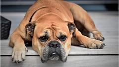 Rusia da luz verde a ley que condena el maltrato animal (HUNI GAMING) Tags: rusia da luz verde ley que condena el maltrato animal
