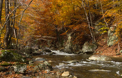 Nelson County Virginia (popago) Tags: autumn foliage trees beech creek forest river wood rock water ree landscape tree colors virginia blueridge