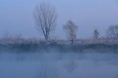Riverside in fog (daniel0027) Tags: mist drygrass angler river rime fog trees water earlymorning morning morningmist reflection riverbank fishingman